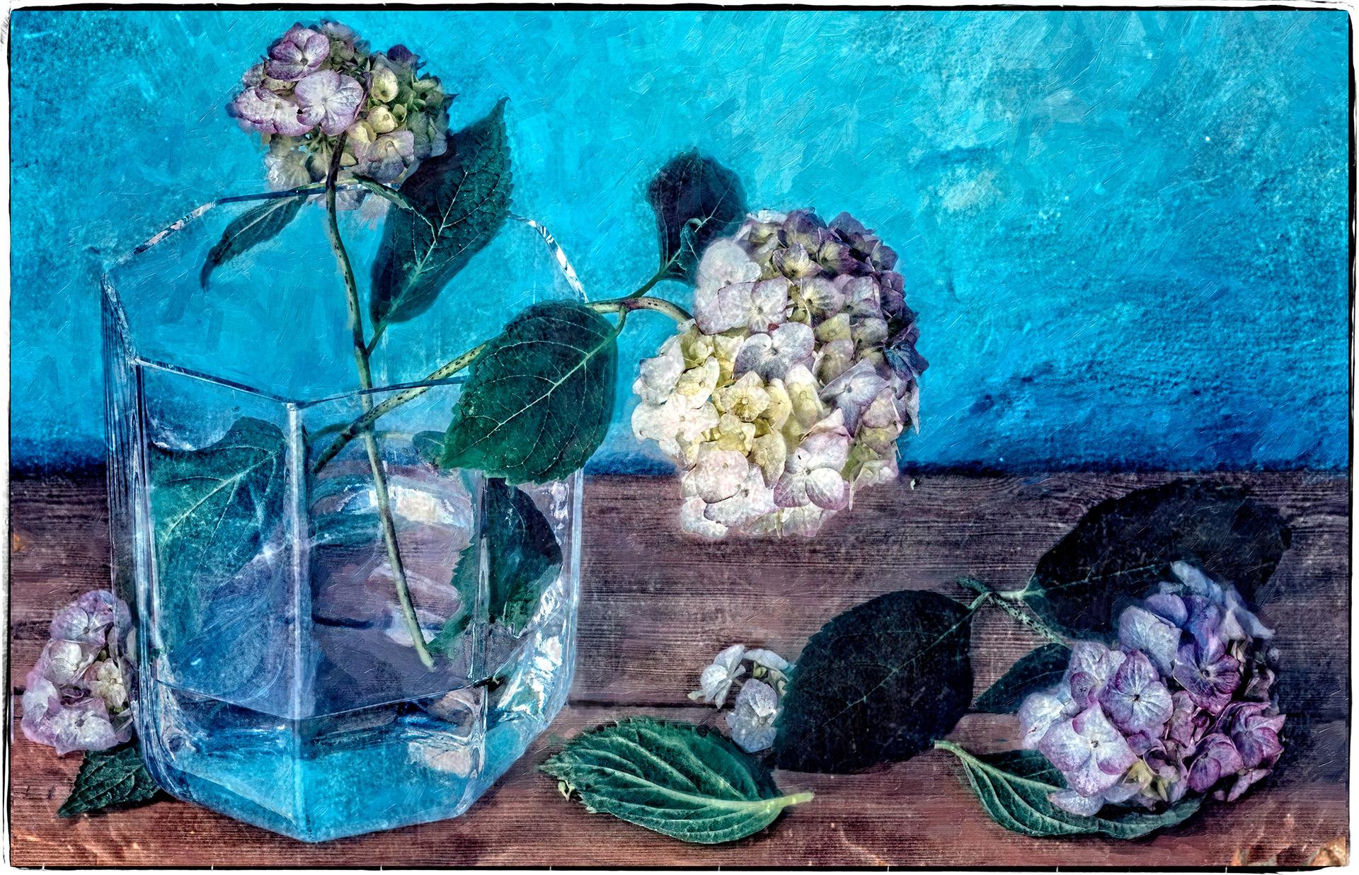 Hortensia against blue